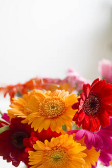 Bouquet of blooming gerbera daisies - CHPF00652