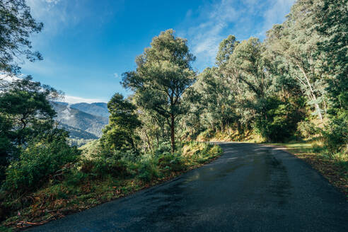 Road through sunny green trees Kosciuszko National Park Australia - CAIF24201