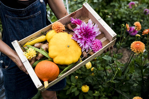 High angle close up of person holding wooden box with fresh vegetables and cut pink Dahlias. - MINF13987