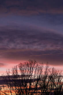 Germany, Purple clouds over silhouette of bare tree at winter dusk - JTF01469
