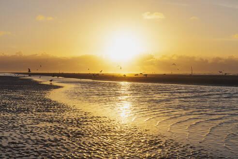 Silhouette seagulls on shore at beach against orange sky during sunset, North Sea Coast, Flanders, Belgium - GWF06537