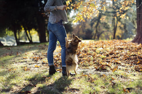 Young woman playing with dog in a park - SODF00727