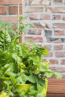 Potted herbs and vegetables growing on balcony - GWF06578