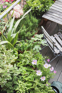 Various culinary herbs growing on balcony - GWF06581