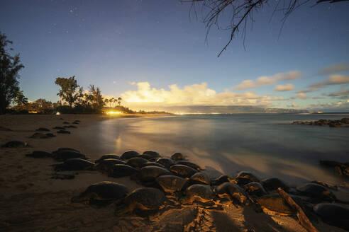 Greenback turtles (Chelonia mydas) on Baldwin Beach, Maui Island, Hawaii, United States of America, North America - RHPLF14156