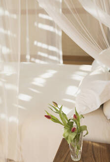 Tulip bouquet in vase on bedside table next to canopy bed with gauze curtains in tranquil modern, luxury home showcase interior bedroom - HOXF05209