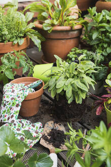 Planting of various culinary herbs and vegetables - GWF06587