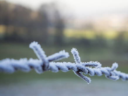 Germany, Close-up of frosted barbed wire - HUSF00116