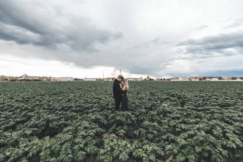 Young couple with transparent umbrella standing in a field hugging each other, Alboraya, Spain - AMAF00022