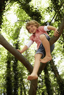 Happy boy climbing tree in forest - AUF00198