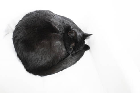 Black cat sleeping on white blanket - CHPF00661