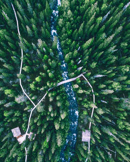 Aerial view of little river amongst the treetops of north forest in Lapland reserve, Karelia, Russia. - AAEF07768