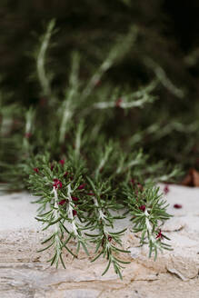 Close-up of petals lying on growing rosemary - LSF00093