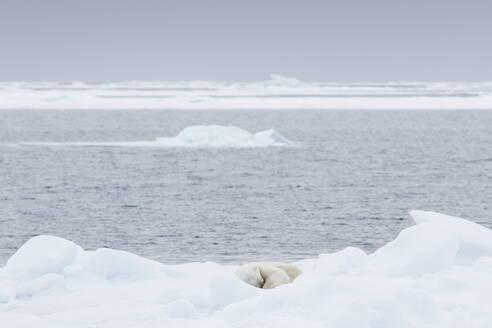 Polar Bear Sleeping On Ice By Sea Against Sky - EYF03663