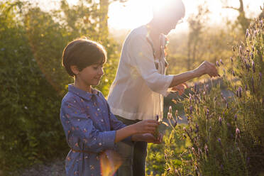 Mother and daughter picking lavender in the countryside at sunset - VSMF00057