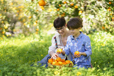 Mother and daughter harvesting oranges in the field - VSMF00138