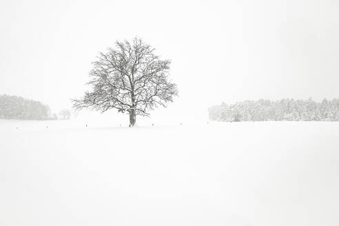Winter landscape with single tree - WFF00305