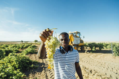 Winegrower showing harvested grapes, Cuenca, Spain - OCMF01188