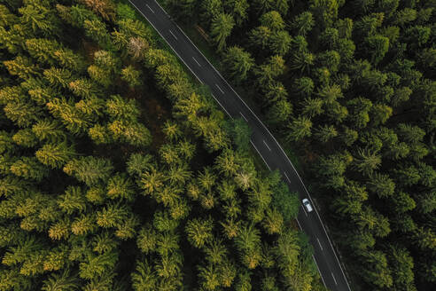 Aerial View Of Road Amidst Trees In Forest - EYF03939