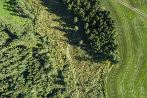 Germany, Bavaria, Drone view of green grove and meadow in summer - RUEF02799