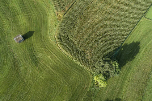 Germany, Bavaria, Drone view of green countryside meadows and cornfield in summer - RUEF02811