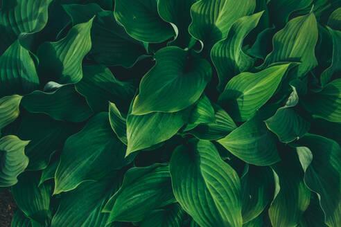 Full Frame Shot Of Plants - EYF04588
