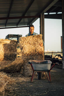 Young farmer wearing blue overall while feeding straw to calves on his farm - ACPF00706