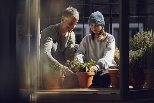 Father and daughter planting flower together on balcony - MCF00725