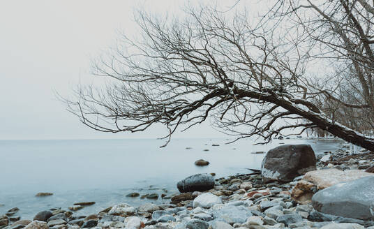Tree leaning over water on the rocky shoreline of a lake in winter. - CAVF79313