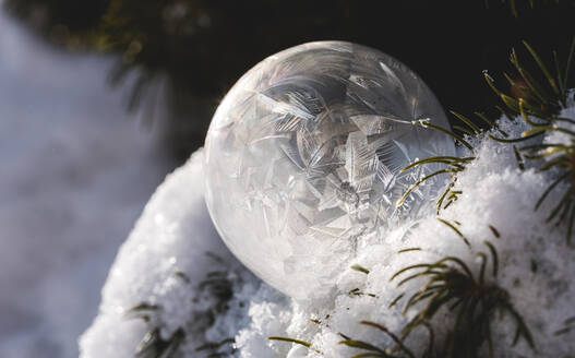 Close up of frozen soap bubble in snow covered tree on a winter's day. - CAVF79331