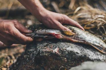 Young man gutting fish at lakeshore - GUSF03721