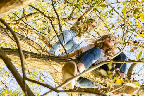 Low angle view of friends relaxing on tree in summer - OJF00386