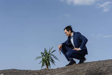 Mature businessman with a plant crouching on a disused mine tip - JOSEF00410