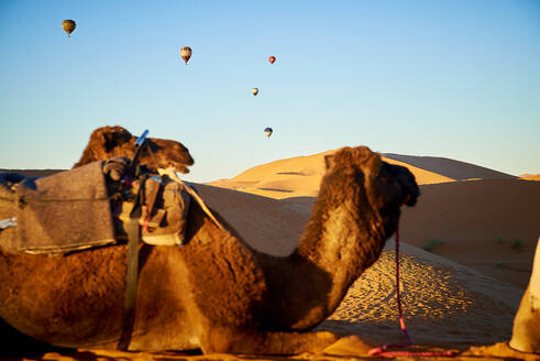 Caravan of camels across the desert with hot air ballons - CAVF79969