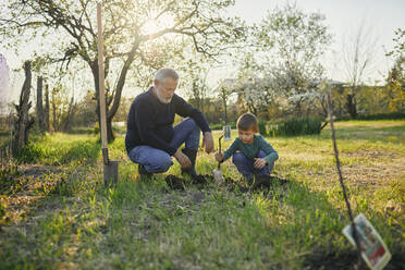Grandfather looking at grandson planting tree while crouching at garden - ZEDF03352