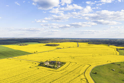 Germany, Brandenburg, Drone view of vast oilseed rape field in spring - ASCF01315