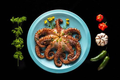 Studio shot of cooked octopus - AMUF00105