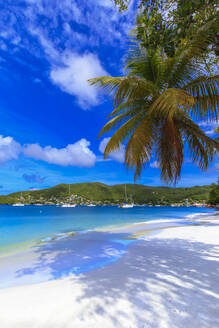Quiet Caribbean, sea shore palm trees, beautiful Port Elizabeth, Admiralty Bay, Bequia, The Grenadines, St. Vincent and the Grenadines, Windward Islands, West Indies, Caribbean, Central America - RHPLF14602