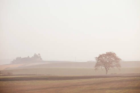 Trees on land against clear sky during foggy weather - MASF17895