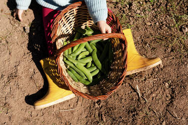 Crop view of little girl sitting on ground with basket of harvested pea pods - GEMF03643