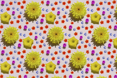 Pattern of colorful flower heads - GEMF03650
