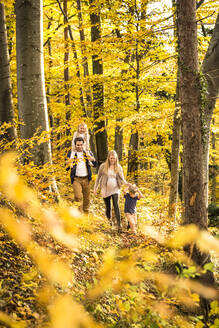Family exploring while walking amidst trees in forest - WFF00398