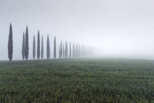 Italy, Tuscany, Grassy meadow and treelined rural road during foggy weather - RPSF00306