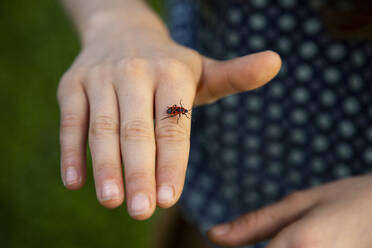 Close-up of firebug (Pyrrhocoris apterus) crawling on hand of little girl - LVF08885