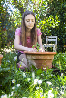 Portrait of girl potting tomato plant in a garden - SARF04584