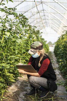Female farm worker with surgical mask checking the growth of organic tomatoes in a greenhouse - MCVF00377