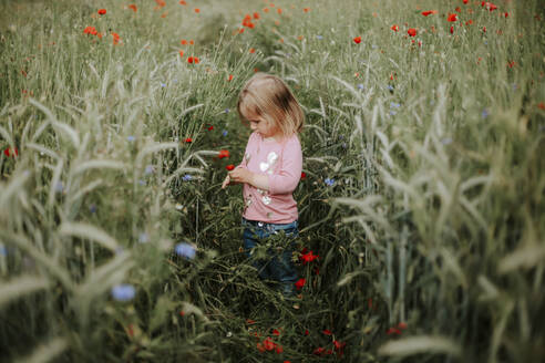 Little girl standing on a field with poppies and wheat - VBF00062