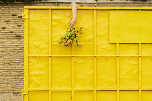 Woman's arm hanging from yellow container, holding bunch of flowers - ERRF03824