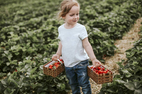 Girl picking ripe strawberries on field - VBF00075