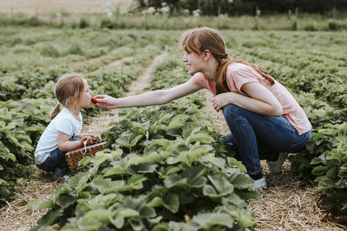 Mother giving her daughter a strawberry on field - VBF00078